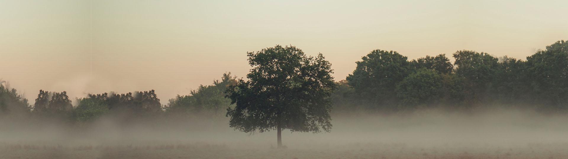 Kaissu istutab sulle puu